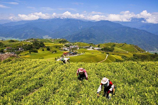 Taichung to Alishan Tea Experience Tour