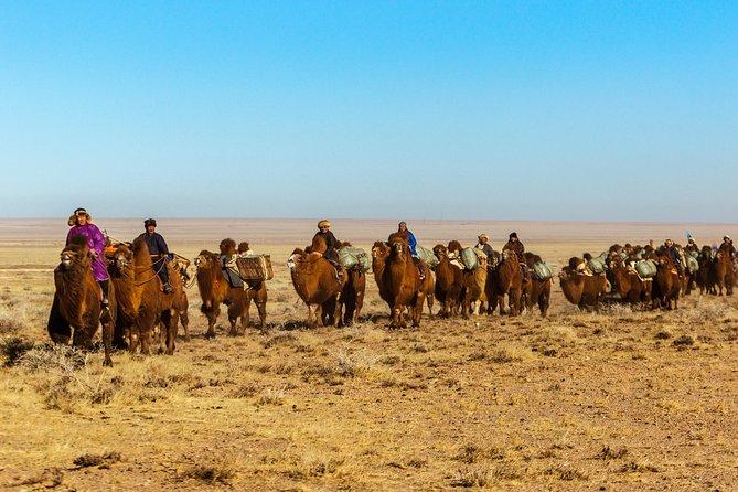 11 Days Camel Caravan of South Gobi