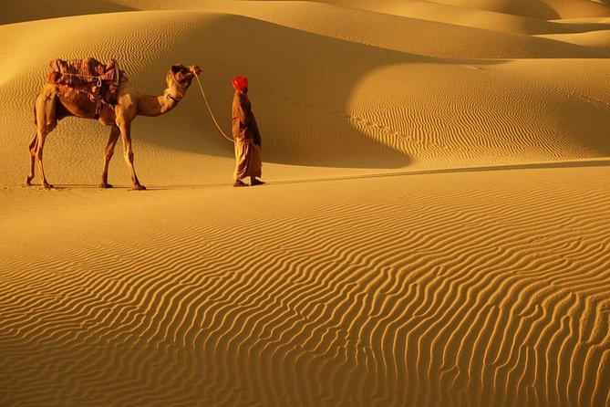 Abu Dhabi desert Safari with BBQ Dinner , Camel Ride , Bally Dance