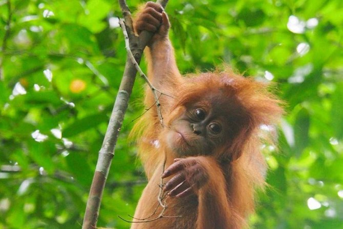 TOUR PACKAGE (jungle trekking, taxi, Room) 4 DAYS 3 NIGHTS in BUKIT LAWANG