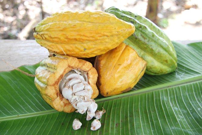 Costa Rica Descents Organic Farm