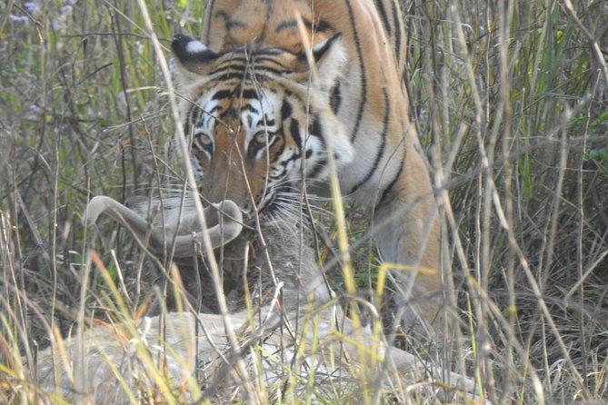 Chasing Tigers (Jim Corbett National Park)
