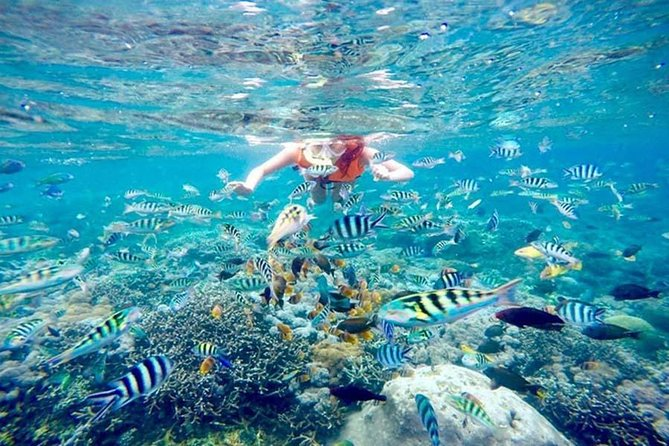 Enjoy Private Snorkeling On The Island Of Nusa Lembongan Using Private Boat