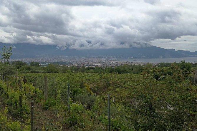 Visit the wine Cellars of Vesuvius (4hr)