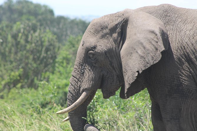 5-Day Big 5 Kidepo valley National Park Safari