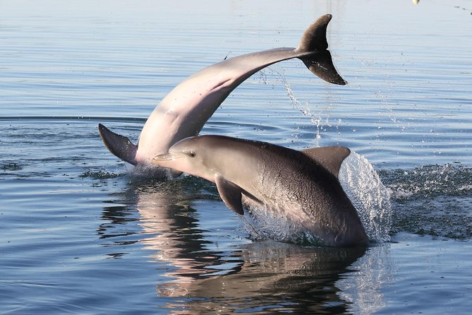 Kayak Tour in Adelaide Dolphin Sanctuary