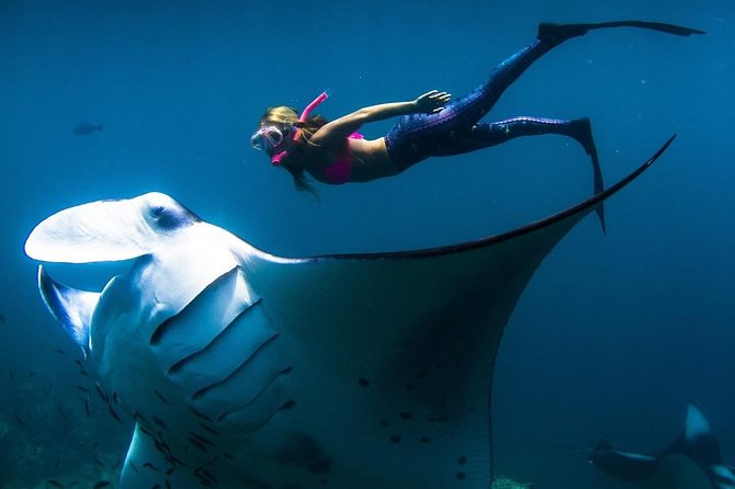 Enjoy Private Snorkeling At Manta Ray In Island Nusa Penida Using Private Boat