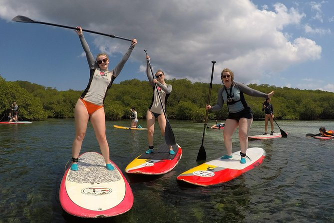 Exploring Mangrove by Stand Up Paddle