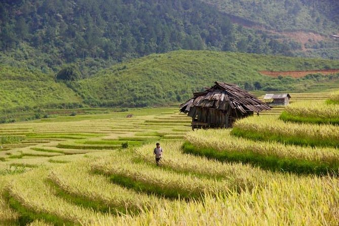 Motorcycle trip - Discovery of the sublime rice fields on the terrace