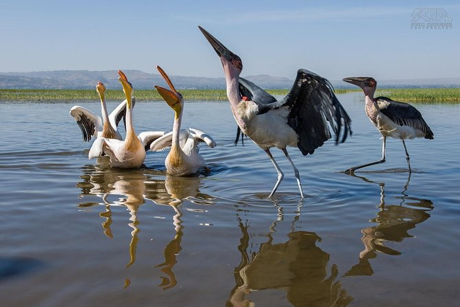 5 Days Bird Watching, Ethiopia