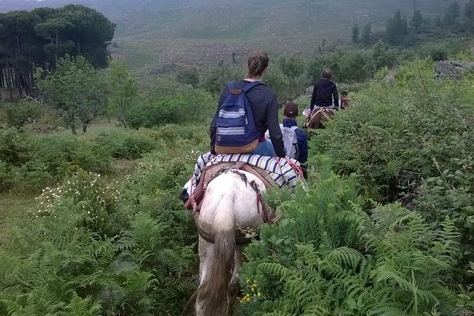 Excursion with mules in the natural Park