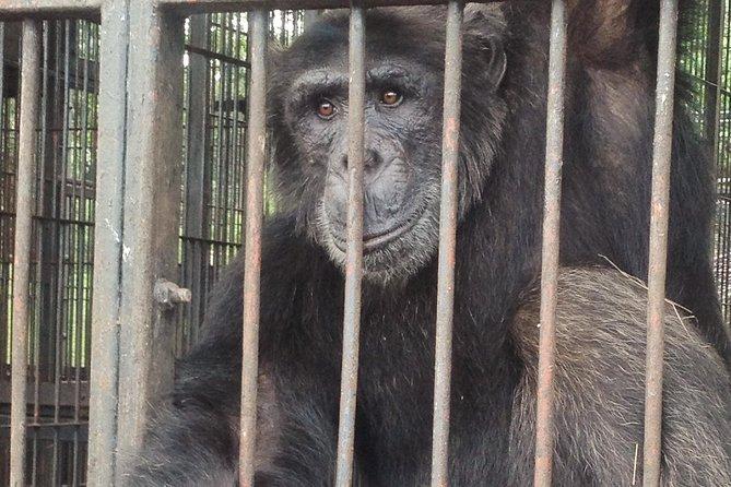 Chimpanzee Island Day Escape