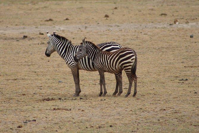 Nairobi National Park Half Day Safari
