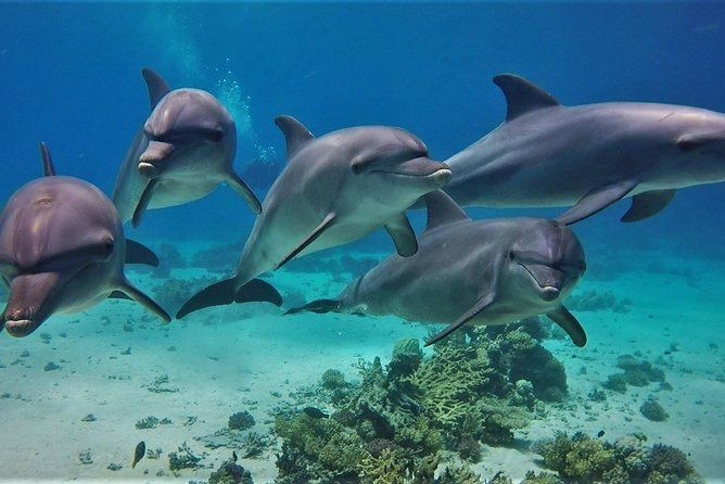Dolphin House Full day Private Boat - Max 10 pax - Hurghada