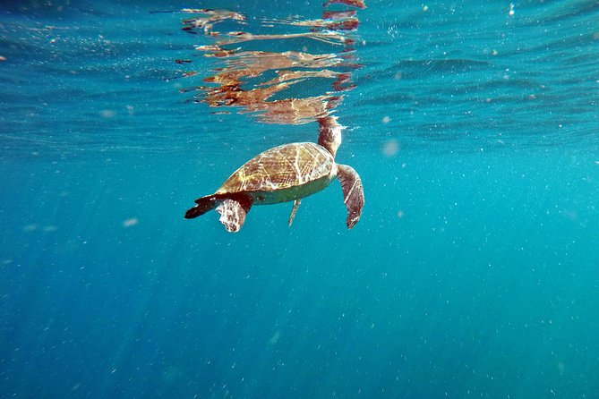 Turtle Snorkeling by Adrenailha