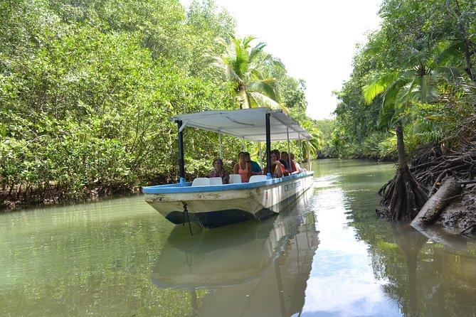 Costa Rica Mangrove Monkey Tour