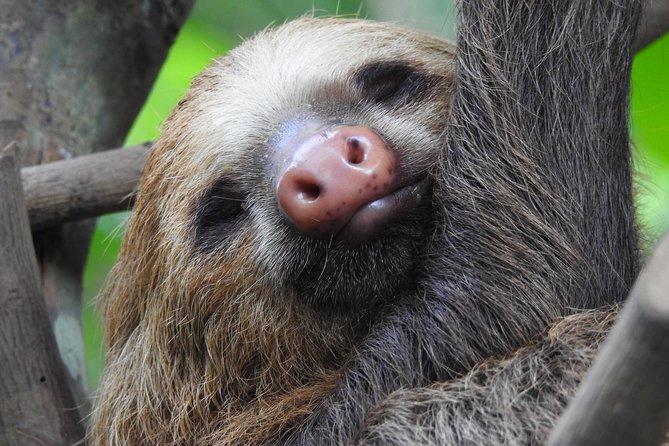 Sloth Tour Manuel Antonio National Park