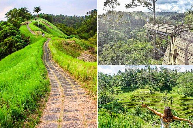 Ubud Countryside Tour: Campuhan Ridge Walk, Rice Terrace, and Coffee Plantation
