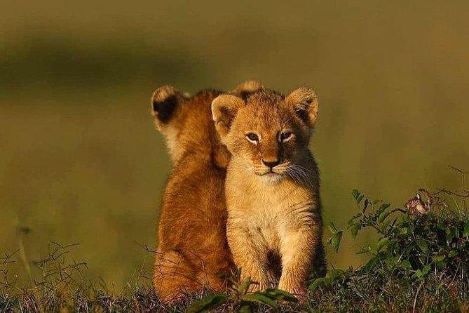 Ngorongoro Adventures in a day