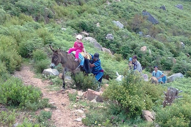 Full day trip to Bouhachem Park by Mules, and Chefchaouen