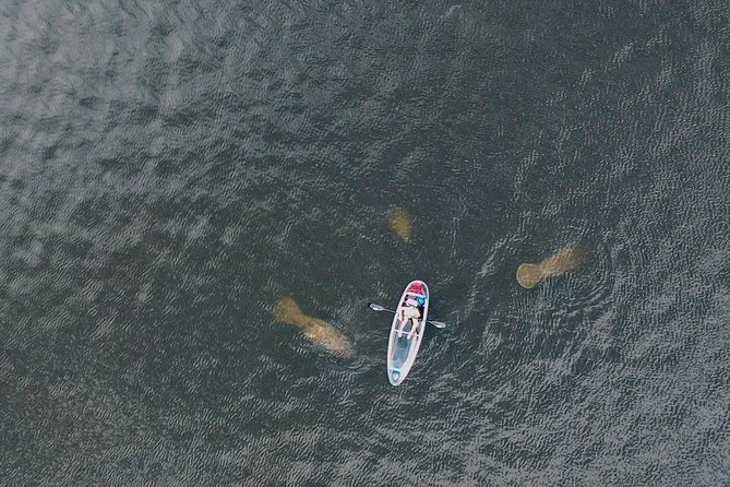 Clear Kayak Tour of Tarpon Springs | Manatee Season