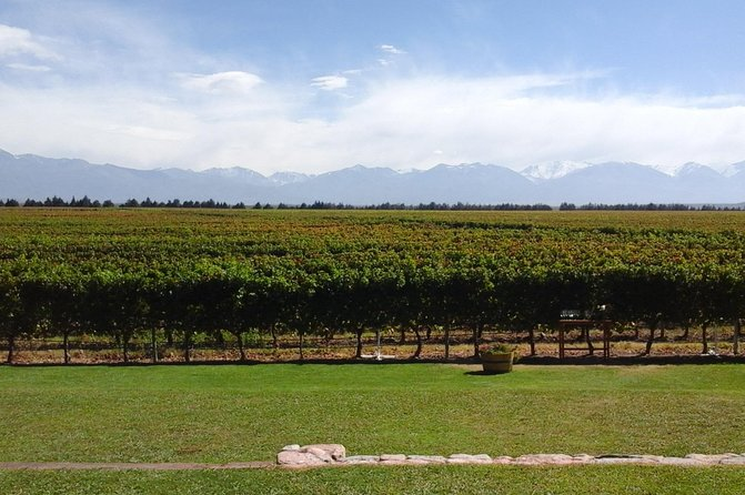 """On the paths of the """"Uco Valley"""" wine"""