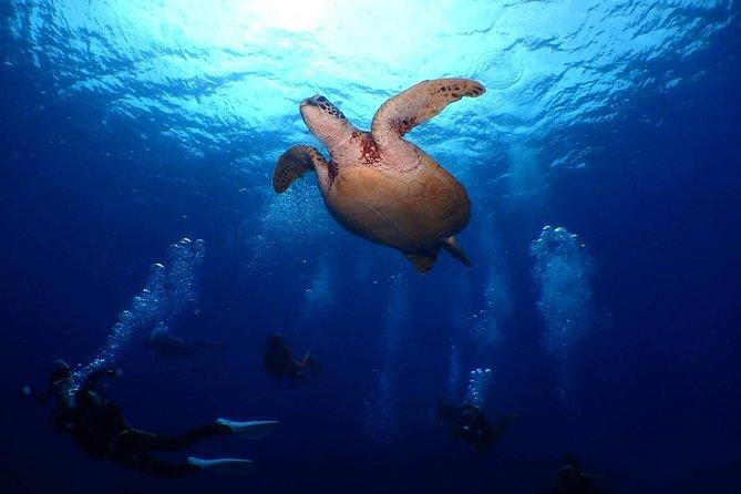 Dep from Naha/Kerama/1 Day: Introductory Diving(1 dive)+Snorkeling+Desert Island