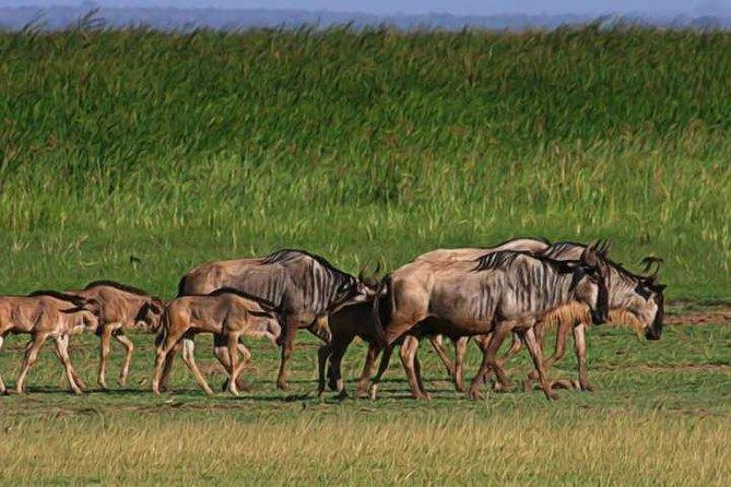 8Days Serengeti Wildebeest Migration Safari Calving Season