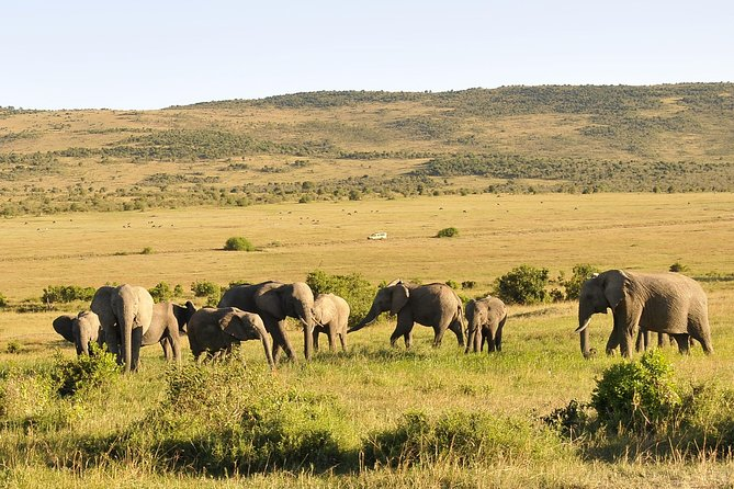 3 Day 2 Nights Maasai Mara Safari
