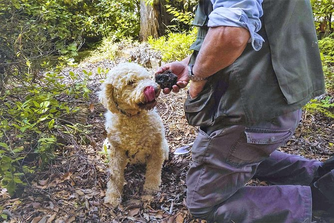 Luck and Patience: truffle hunting in Tuscany