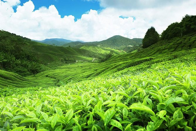 Experience the Beauty of Nuwara Eliya In two Days photo 4