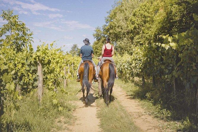Horseback riding with Tuscan picnic