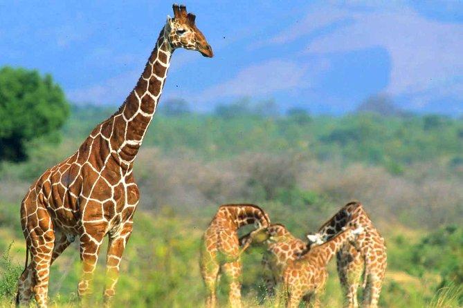 4 Days Samburu and Meru National reserve