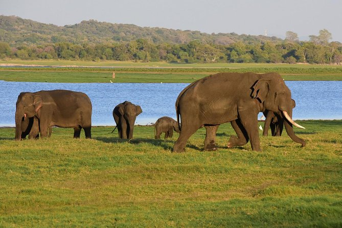 Visit Polonnaruwa and Kaudulla National Park in 2 Days photo 3