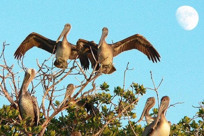 Birding Photography Boat Tour - See the Amazing Birds of Rookery Bay! photo 3