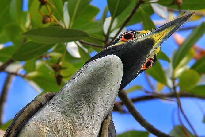 Birding Photography Boat Tour - See the Amazing Birds of Rookery Bay! photo 10