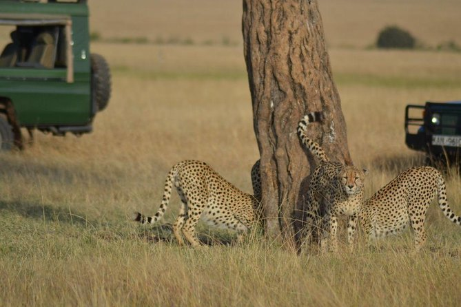 6 Days Amboseli, Lake Nakuru and Masai Mara photo 4