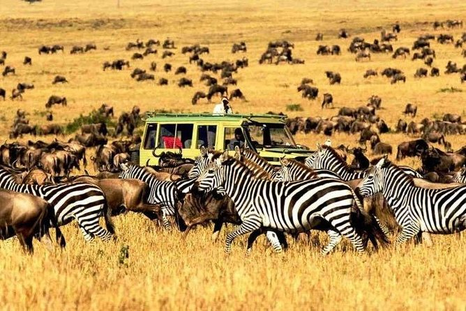11 Days: Tanzania &Rwanda Safaris (great migration and air balloon)