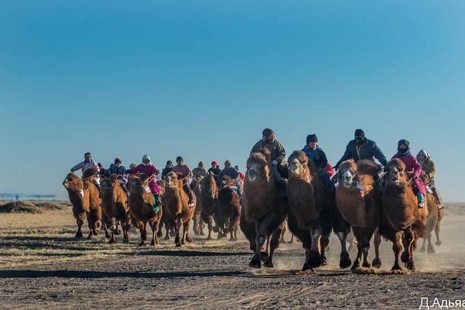 8 Days Camel Festival 2020