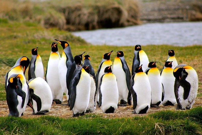 Full Day Penguin King
