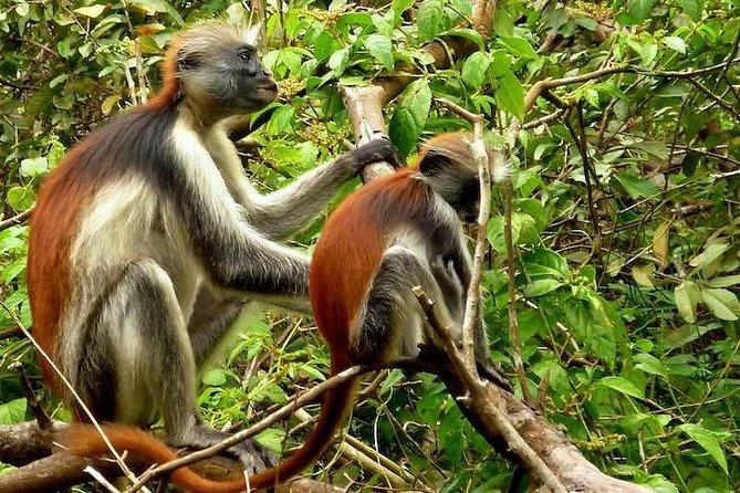 Zanzibar Jozani Jungle-Nature Walk
