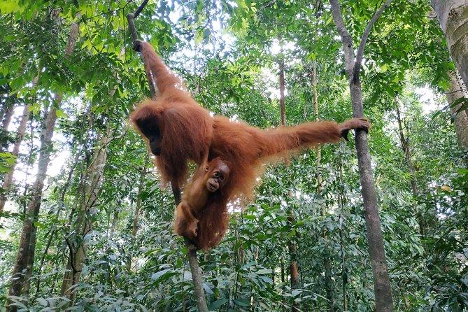 3 Days Bukit Lawang Tour (Happy Jungle)