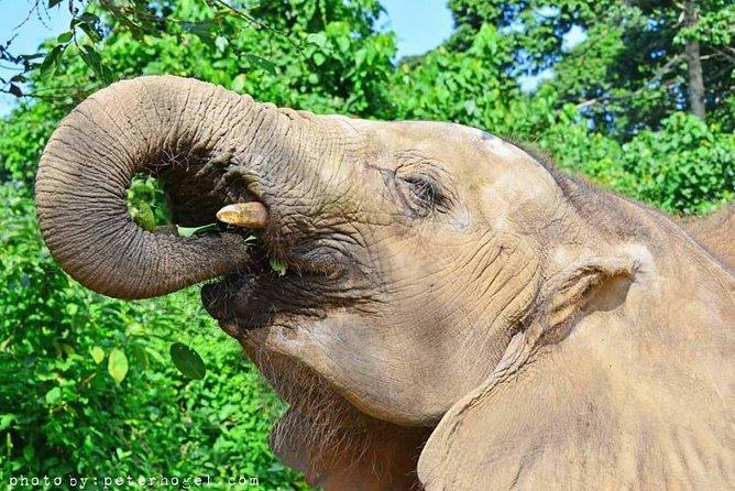 5days best of Uganda Safari