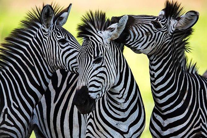 11 Days/10 Nights Serengeti Luxurious Trip Tanzania