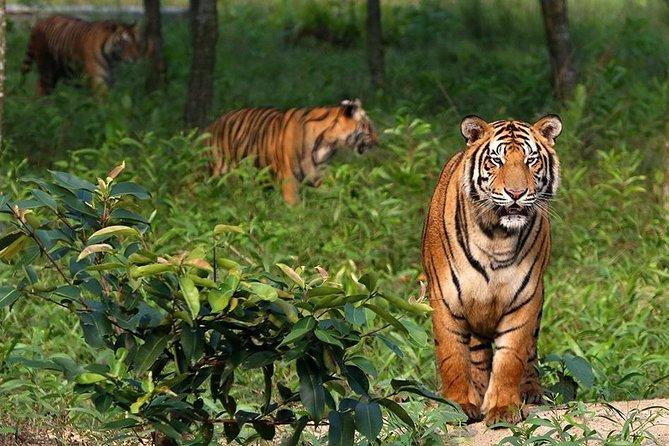 Kotka , Kochikhali Wildlife Sanctuary with World Biggest Mangrove Forest