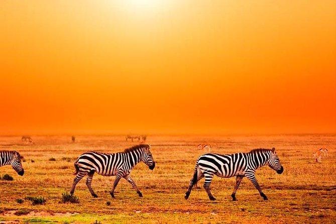 ten day safari in Tanzania northern circuit