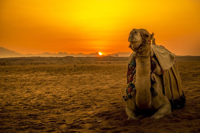 Hurghada: Star watching Desert Adventure by Jeep