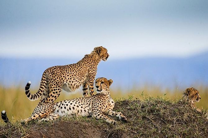 8 Days/7 Nights Safari Trip Tanzania