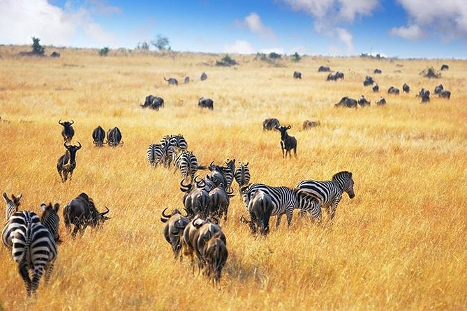 6 Days/5 Nights Serengeti Luxury Trip Tanzania