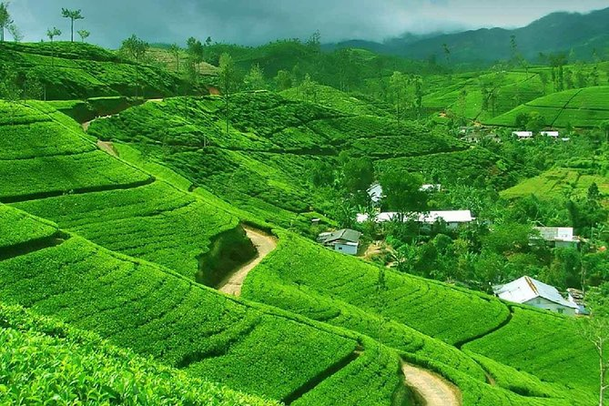 Nuwara Eliya Day Tour from Kandy